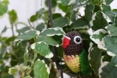 love bird1