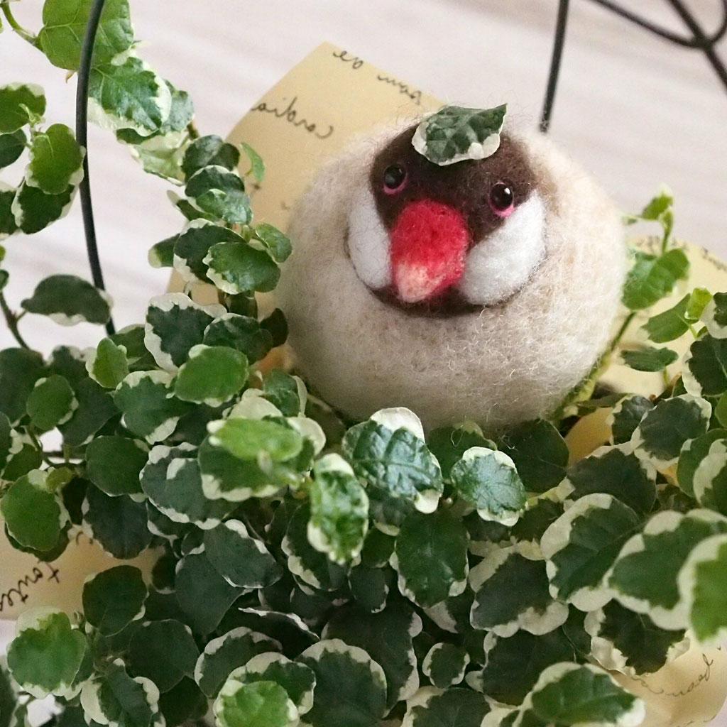 java sparrow6