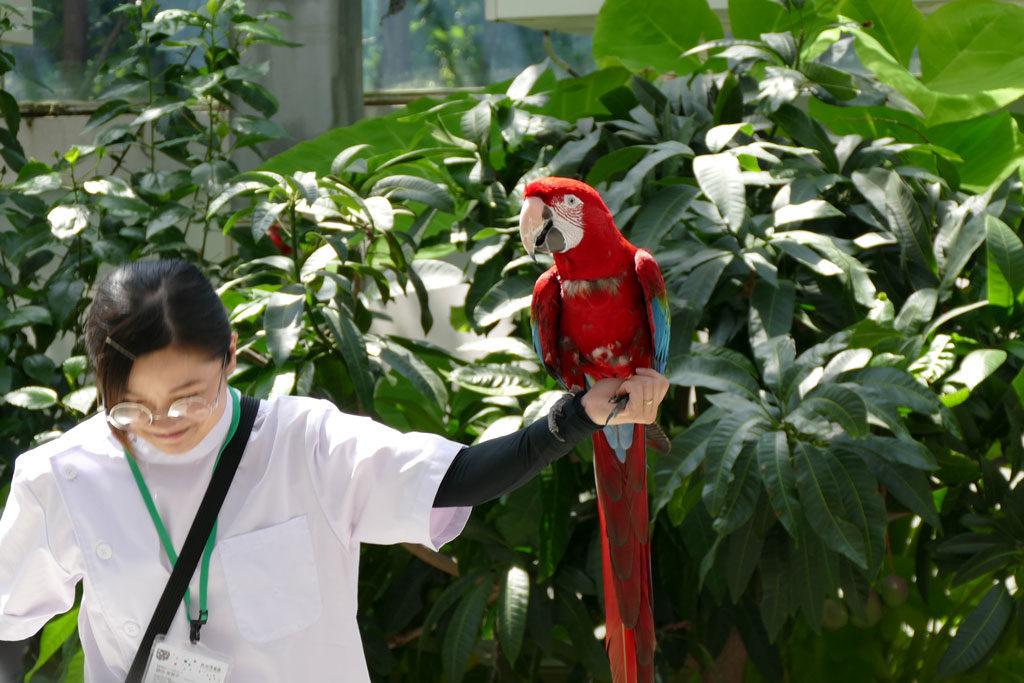掛川花鳥園6:LUMIX DMC-FZ1000