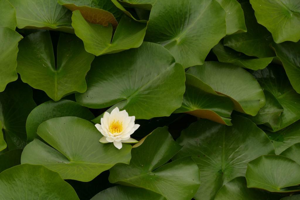 新潟県立植物園6:LUMIX DMC-FZ1000