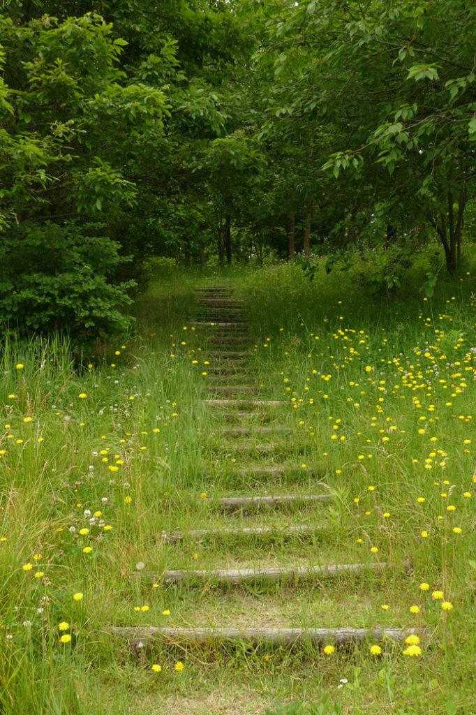 新潟県立植物園5:LUMIX DMC-FZ1000