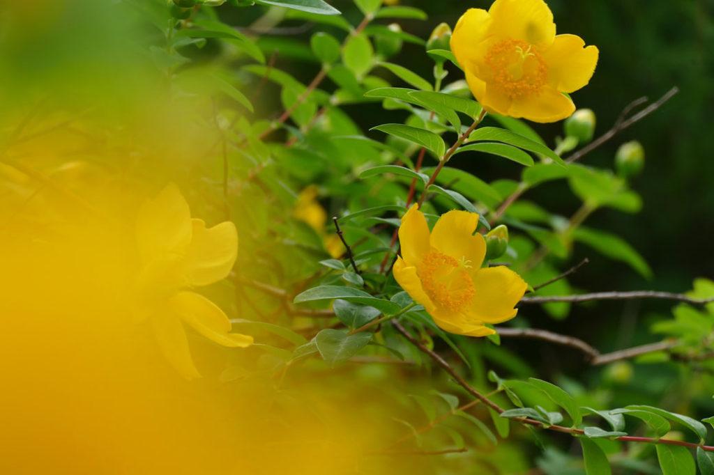 新潟県立植物園7:LUMIX DMC-FZ1000