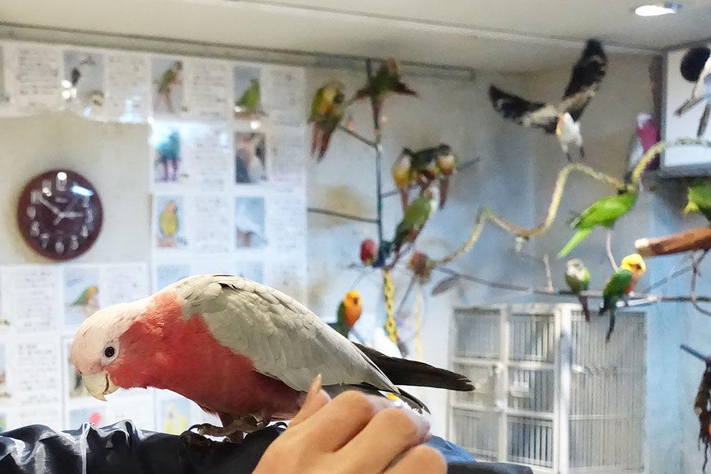 鳥のいるカフェ浅草店11:DSC-RX100M3