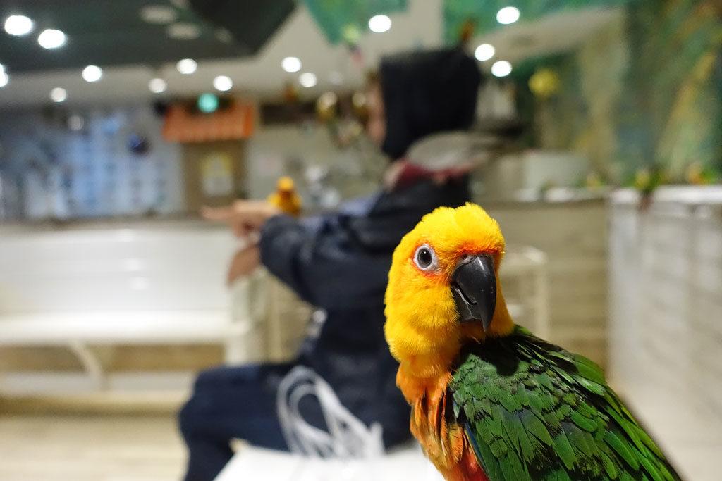 鳥のいるカフェ浅草店8:DSC-RX100M3