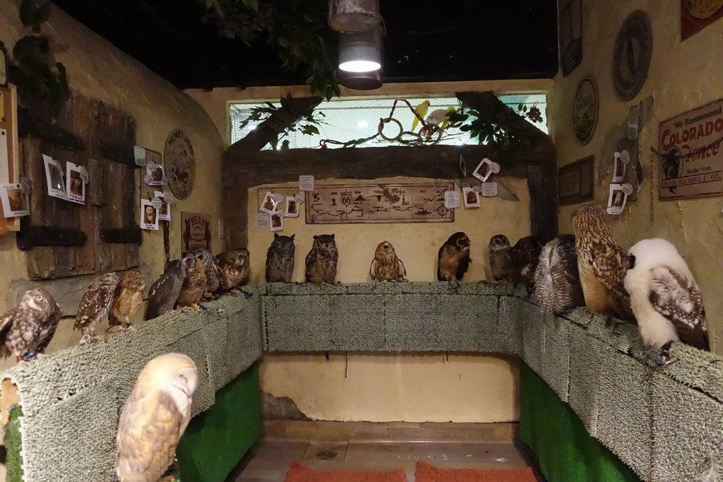 鳥のいるカフェ浅草店2:DSC-RX100M3
