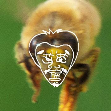 コスモスとオヤジ顔ミツバチ