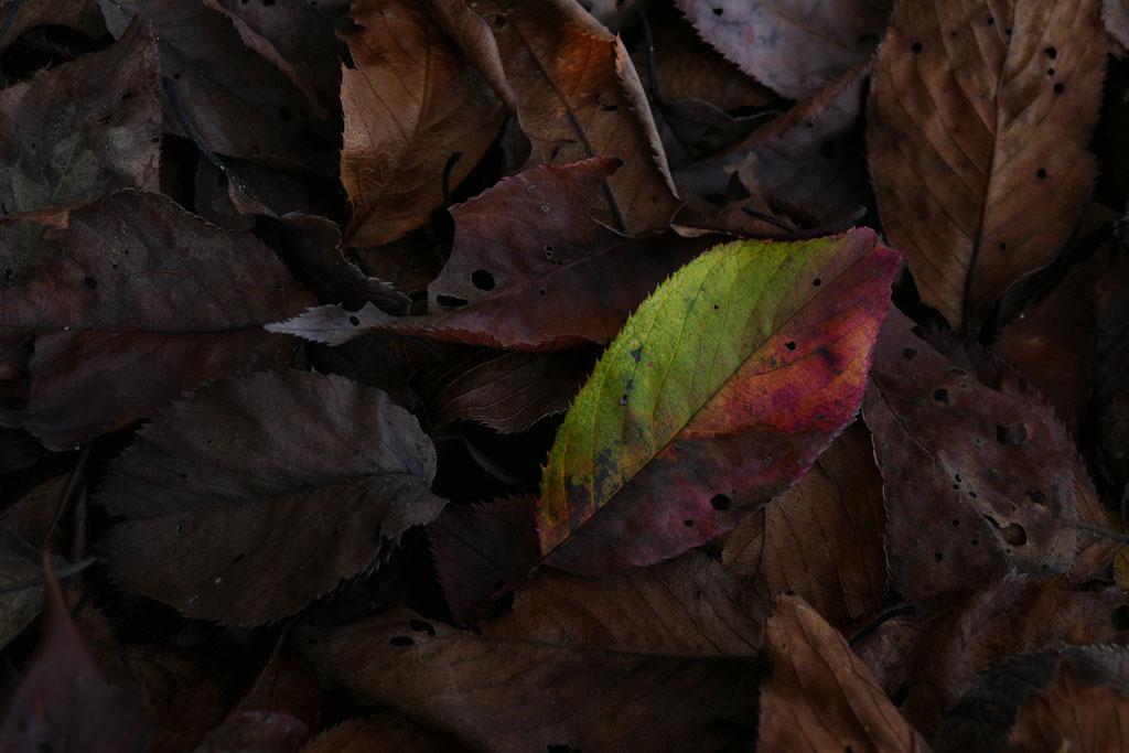 ある秋の日の恐怖体験