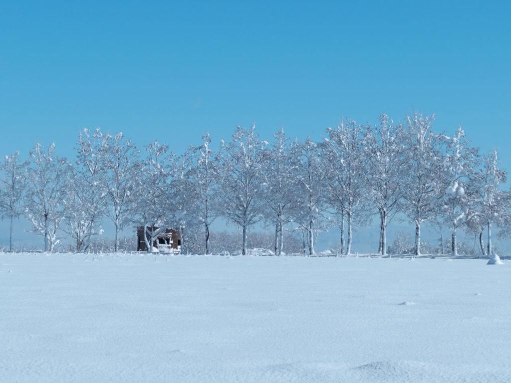 冬の福島潟3:LUMIX DMC-FZ1000