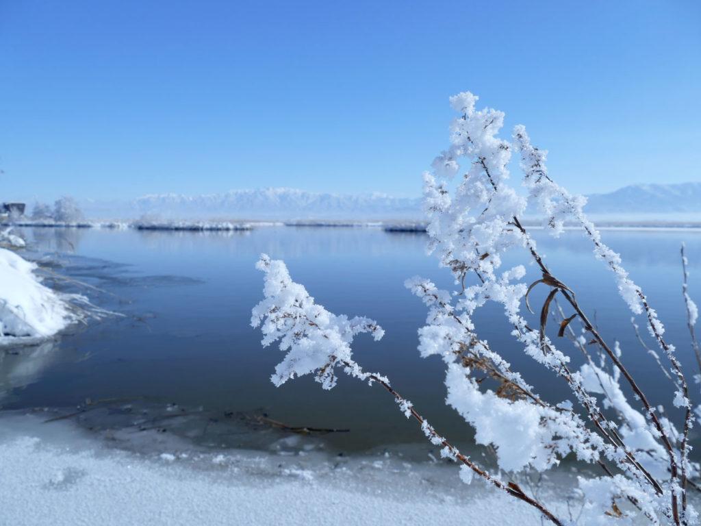 冬の福島潟5:LUMIX DMC-FZ1000