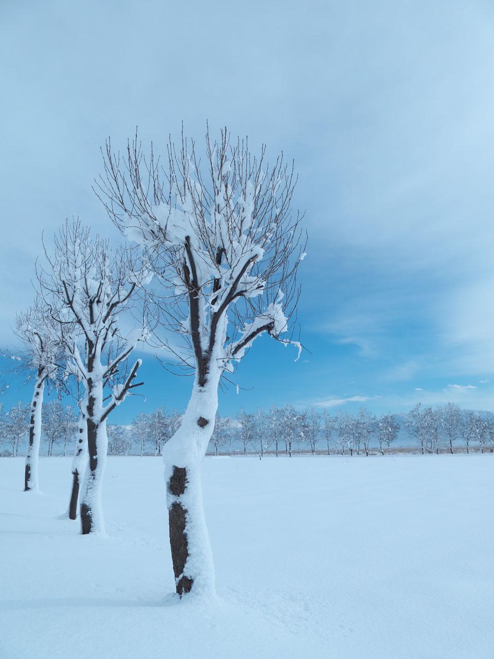 青空と雪の福島潟