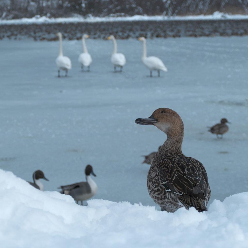 凍った升潟8:LUMIX DMC-FZ1000