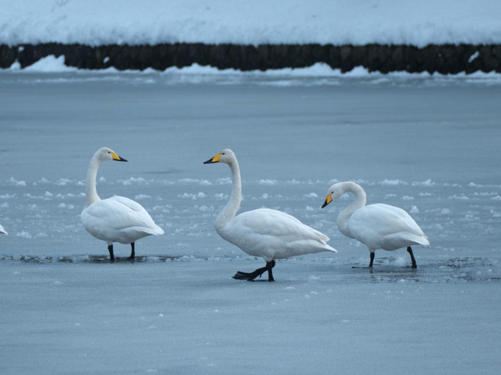 凍った升潟5:LUMIX