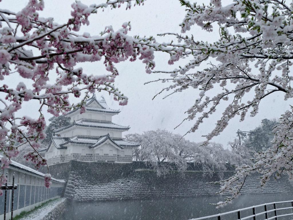 雪と桜の新発田城址公園1:DMC-FZ1000
