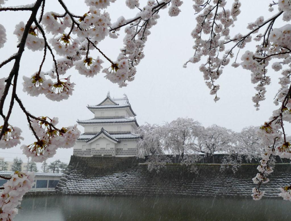雪と桜の新発田城址公園2:DMC-FZ1000