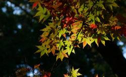 リス園と紅葉の加茂山公園へ