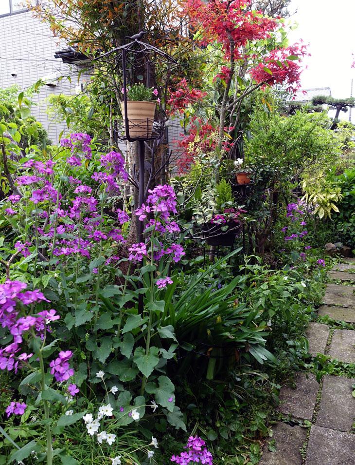 5月の庭6