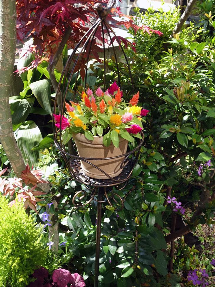 5月の庭8