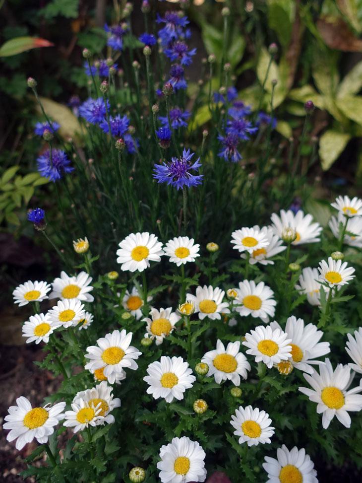 5月の庭5