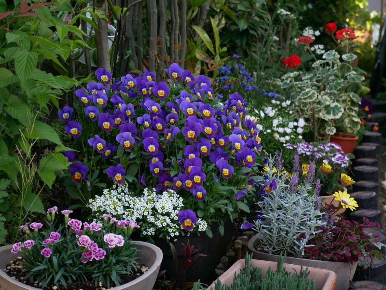 5月の庭1