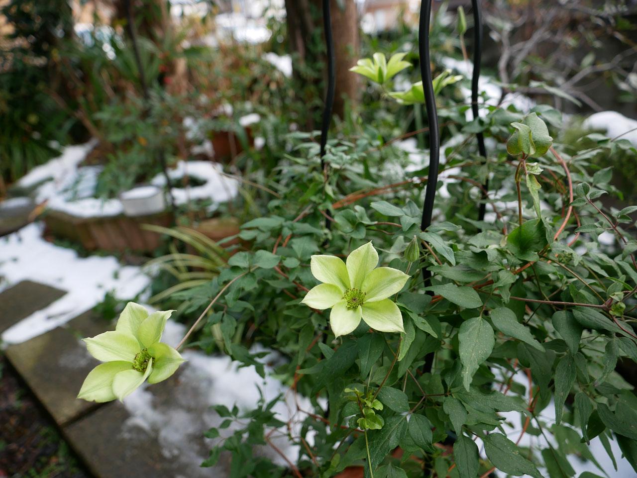 真冬のテッセン1