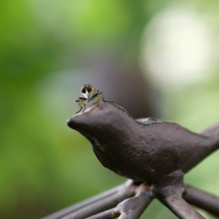 庭の生き物をマクロレンズで撮る<br>– 春~初夏 –