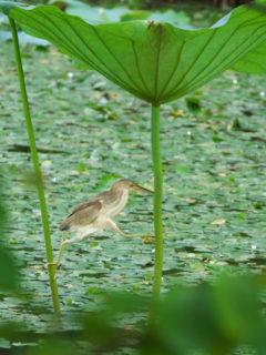 瓢湖で撮った野鳥