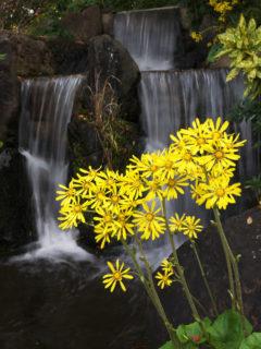 滝撮りの練習スポットに新潟市の天寿園