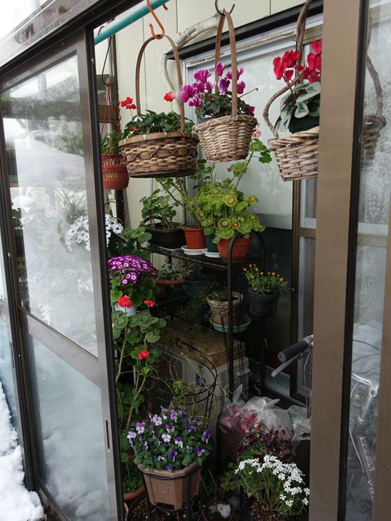 冬の風除室