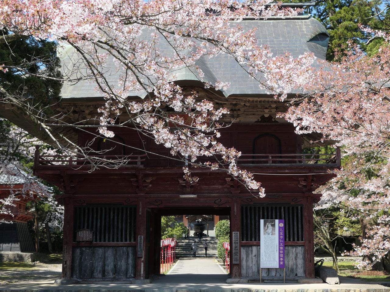 乙宝寺の桜1:LUMIX DC-TX2