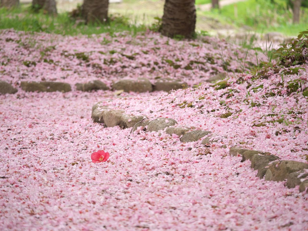 花びらの絨毯