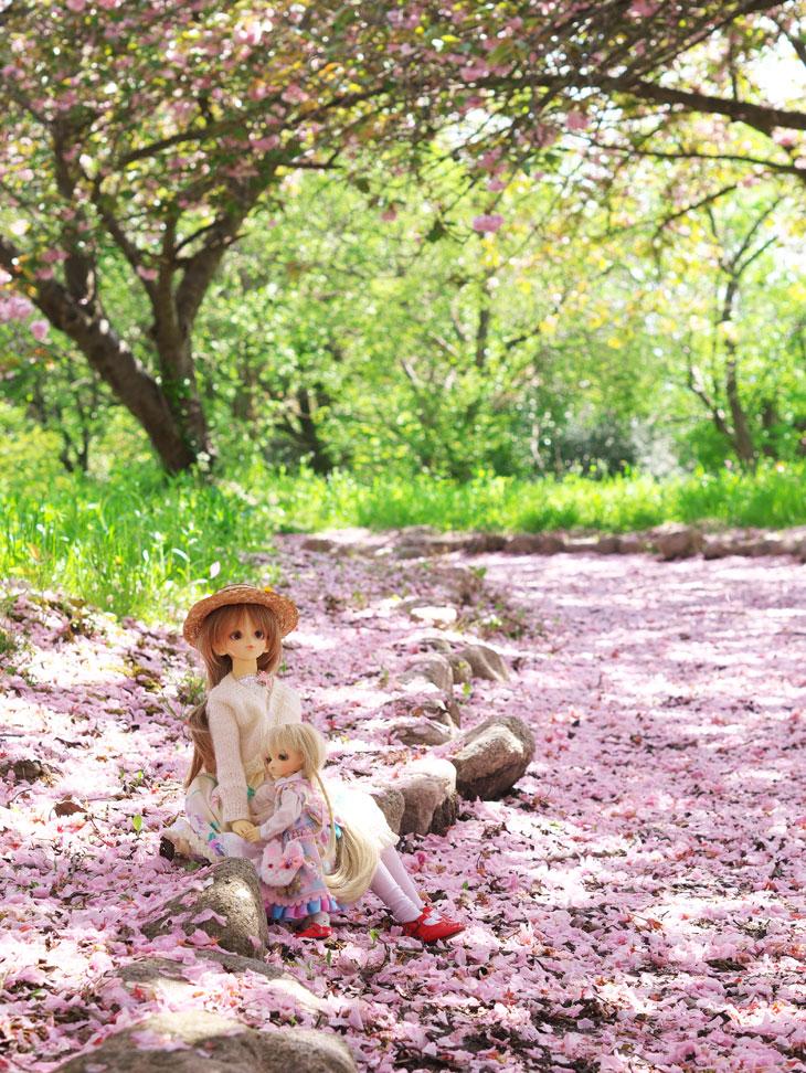 花びらの絨毯とお人形